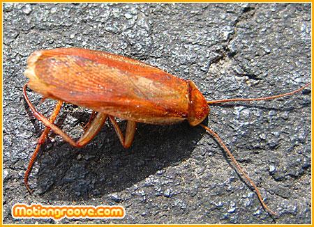 dead-beetle-bug
