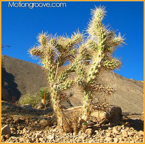 dec-2-09-vegas-cactus