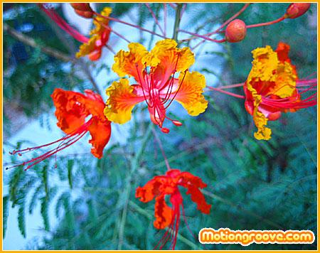 funky-flowers-las-vegas