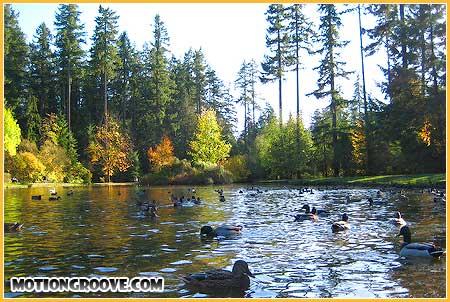 oct-25-09-central-park-ducks