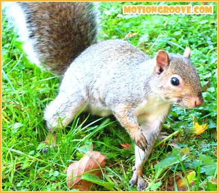 oct-25-squirrel