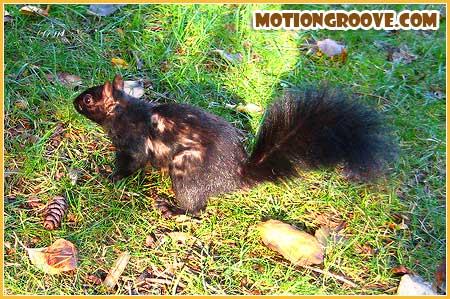 oct-25-squirrel2
