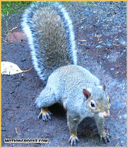 oct-25-squirrel3