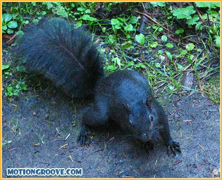 oct-25-squirrel4
