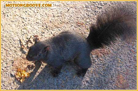 oct-25-squirrel5