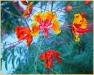 funky-flower